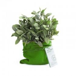 Urtepotte pose grøn